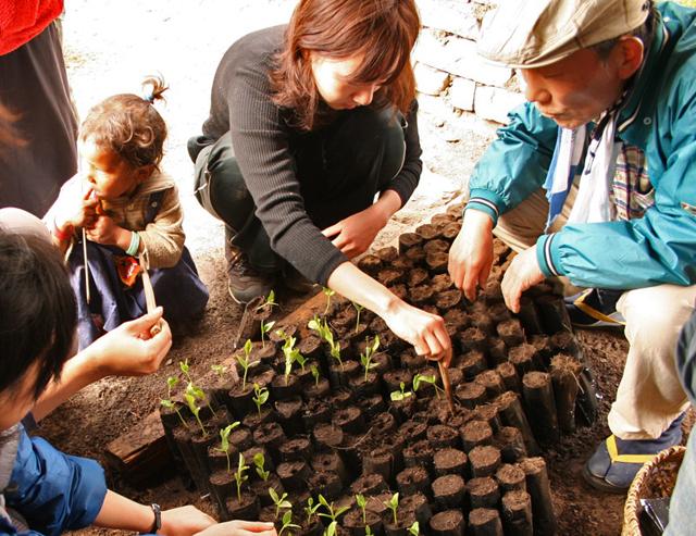 種から苗木を育てる