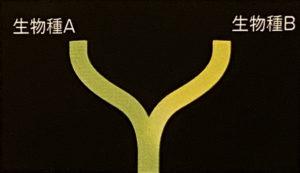 図1 茎進化のモデル(注, p.101)